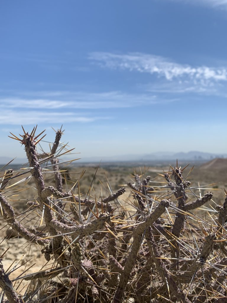 Bear's Best Trail System Cactus